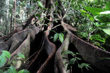 Das Geheimnis der Bäume am schweizweiten Stubenkino am Earth Day am 22. April. Komm vorbei zu einem der gratis Film-Events in deiner Nähe!Alle Events hier: www.filmefuerdieerde.org/earthday