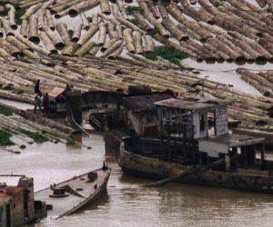 Zwischen den gefällten, entasteten und entrindeten Bäumen liegen drei Schiffwraks. Auf den Baumstämmen balancieren ein paar Menschen, die die Baumstämme für den Weitertransport bereit machen.