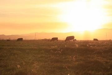 Cowspiracy Filmstill