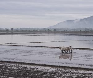 Ein Bauer pflügt mit zwei Ochsen sein Reisfeld. Im Hintergrund Hügel mit Wäldern.