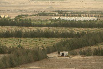 Umgeben von Wüstensand die grünen Felder von Sekem, der biologischen Landbau-Initiative.