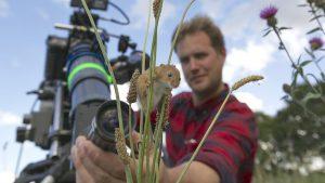 Im Vordergrund eine Zwergmaus auf ein paar Weizenhalmen, im Hintergrund der Kameramann, wie er die Maus filmt.